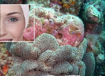 Коралловый пилинг: преимущества и недостатки процедуры
